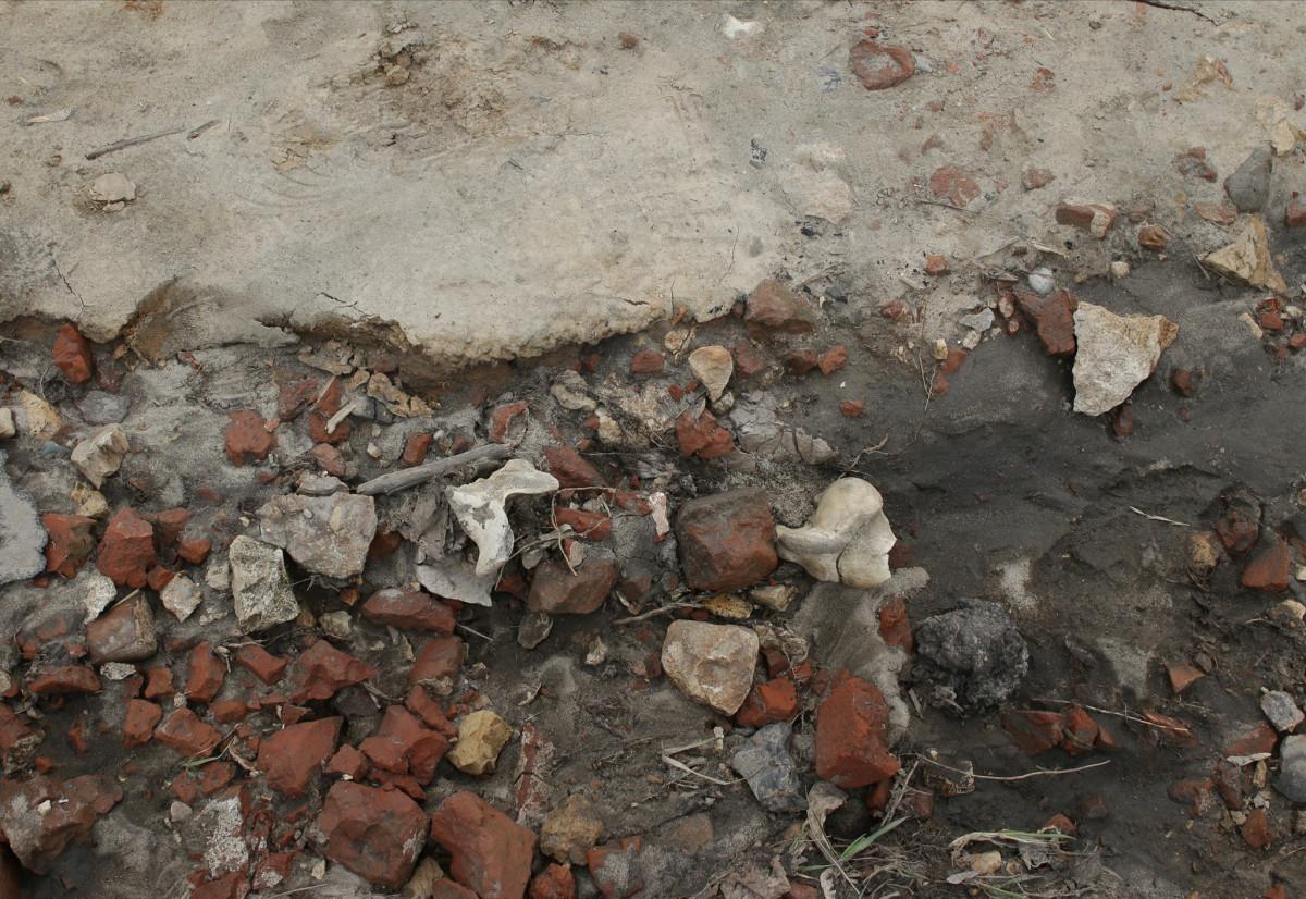 Найденные около Нижегородского кремля кости принадлежали животным