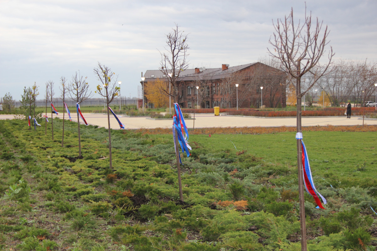 Липовая аллея появилась уАлександро-Невского собора вНижнем Новгороде