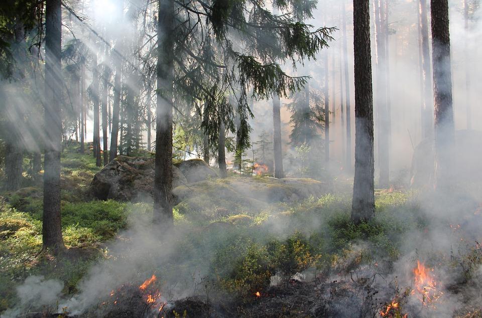 Подведены промежуточные итоги работы нижегородского Центра мониторинга лесных пожаров