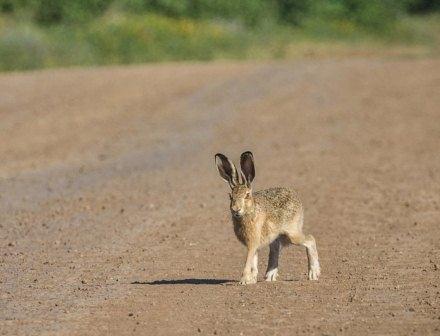 Сезон охоты напушные виды животных начался вНижегородской области