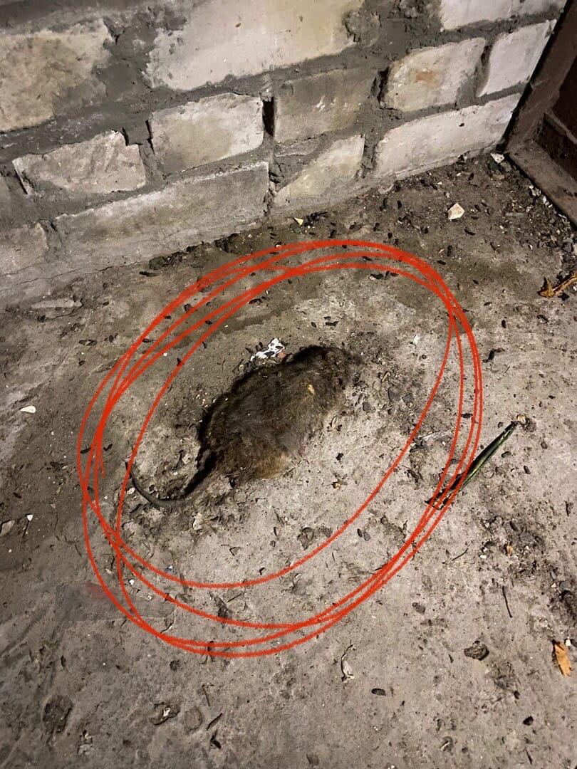 Нижегородец пожаловался нагрязный подъезд вСоветском районе