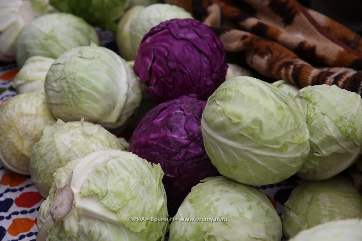 Морковь, капуста ияблоки подешевели вНижегородской области