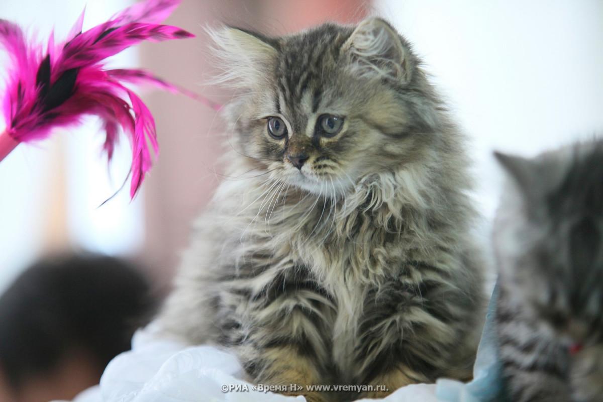 Стало известно, какие породы кошек больше всего любят нижегородцы